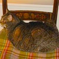 Adopt A Pet :: Leo - Oberlin, OH