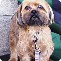 Adopt A Pet :: Tyson - Grand Prairie, TX