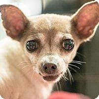 Adopt A Pet :: Izzie - Gainesville, FL
