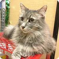 Adopt A Pet :: Abigail - Arlington/Ft Worth, TX