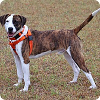 Adopt A Pet :: Danny - Pinehurst, NC