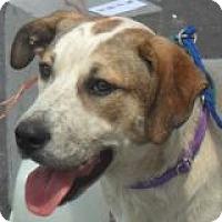 Adopt A Pet :: Callie - Grand Saline, TX