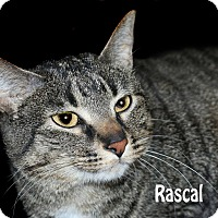 Adopt A Pet :: Rascal - Idaho Falls, ID