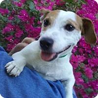 Adopt A Pet :: Lorenzo - Gilbert, AZ