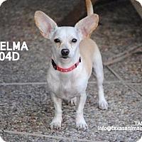 Adopt A Pet :: Thelma - Spring, TX