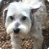 Adopt A Pet :: Acorn - Woonsocket, RI