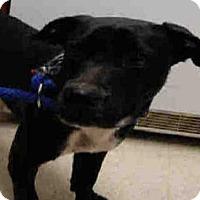 Adopt A Pet :: *PIPPER - Bakersfield, CA