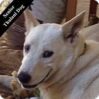 Adopt A Pet :: Shiloh T. - Cupertino, CA