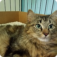 Adopt A Pet :: Momma Heather - Garden City, MI