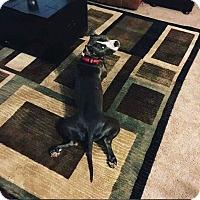 Adopt A Pet :: Jax - Saint Augustine, FL
