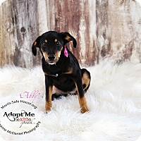 Adopt A Pet :: ABBY - Lubbock, TX