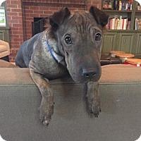 Adopt A Pet :: Hannah - ROSENBERG, TX