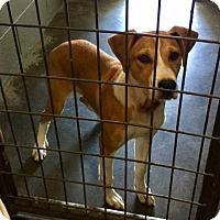 Adopt A Pet :: Trampus - Breinigsville, PA