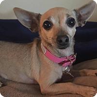 Adopt A Pet :: Mia - San Diego, CA