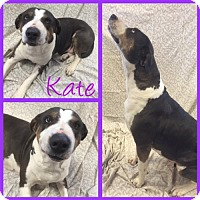 Adopt A Pet :: Kate - Alvarado, TX