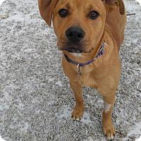 Adopt A Pet :: Reddy - South Amana, IA