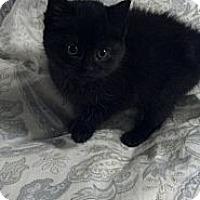 Adopt A Pet :: Mystic - Sterling Hgts, MI