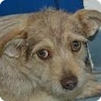 Adopt A Pet :: Annalise - Mahopac, NY