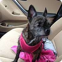 Adopt A Pet :: Chloe - Youngstown, OH