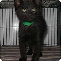 Adopt A Pet :: Rhonda - Shelton, WA