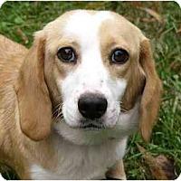 Adopt A Pet :: Charity - Mocksville, NC