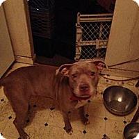 Adopt A Pet :: Mommas - selden, NY