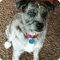 Adopt A Pet :: Mabel-STUNNING! - Hadley, MI