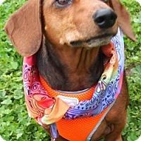 Adopt A Pet :: Skippy2 - Humble, TX