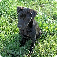 Adopt A Pet :: Nikki - Waller, TX