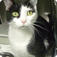 Adopt A Pet :: autumn - Muskegon, MI