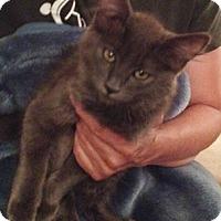 Adopt A Pet :: Mattel - North Highlands, CA