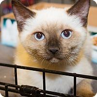 Adopt A Pet :: Sierra - Irvine, CA