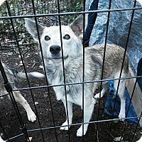 Adopt A Pet :: Cater - Pitt Meadows, BC
