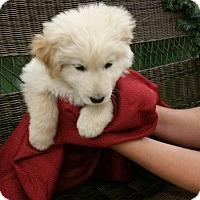Adopt A Pet :: MONICA - Rancho Cucamonga, CA