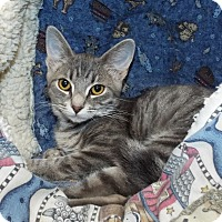 Adopt A Pet :: Maya - Grants Pass, OR