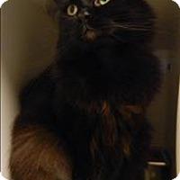 Adopt A Pet :: Brooks - Topeka, KS