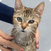 Adopt A Pet :: Tabitha - Fort Collins, CO