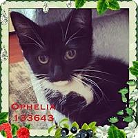 Adopt A Pet :: Ophelia - Raleigh, NC