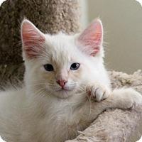 Adopt A Pet :: Goddito - Los Angeles, CA