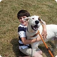 Adopt A Pet :: JJ - Lebanon, CT