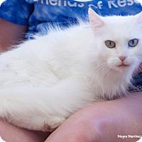 Adopt A Pet :: Love Dove - Marietta, GA