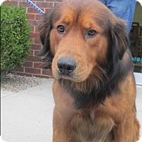 Australian Shepherd/Shepherd (Unknown Type) Mix Dog for adoption in Mount Sterling, Kentucky - Clyde