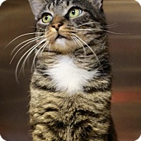 Adopt A Pet :: Bobby McGee 33725688 - Westampton, NJ