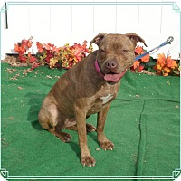 Adopt A Pet :: ROUGE SEE ALSO STORM - Marietta, GA