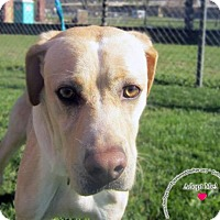Adopt A Pet :: Monti - Sidney, OH