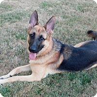 Adopt A Pet :: Dagnar - Woodinville, WA