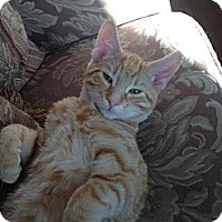 Adopt A Pet :: Lucas - Red Deer, AB