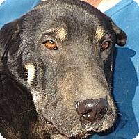 Adopt A Pet :: Lucas - Salem, NH