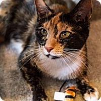 Adopt A Pet :: Tierney - Byron Center, MI
