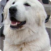 Adopt A Pet :: Bonnie -Adopted - Oklahoma City, OK